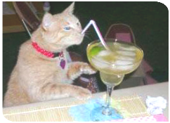 chat drink